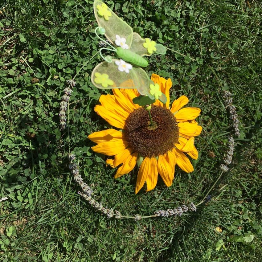 Blume und Schmetterling im Garten